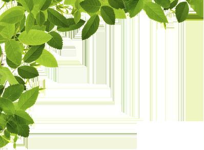 葉っぱ-左