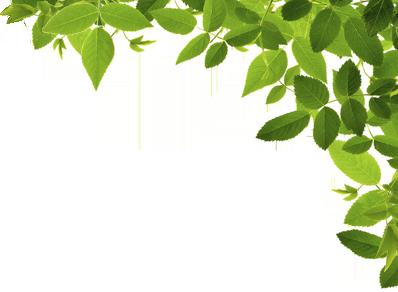 葉っぱ-右
